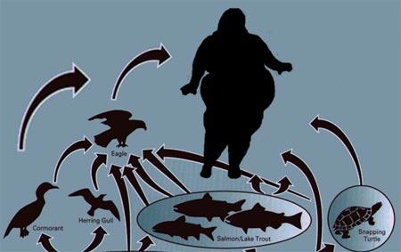 Dieting & Food