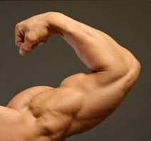 big-arms-big-guns.jpg